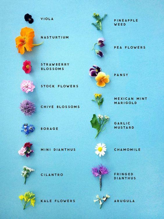 Edible Flowers…very cool! ~12.13.19